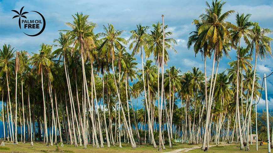 Biodynamická kosmetika bez palmového oleje