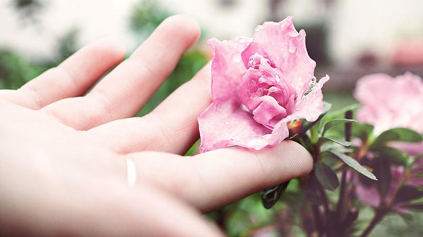 Růžový květ - krém na ruce dieNikolai