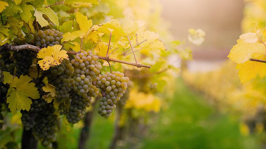 Vinohrad a biodynamická kosmetika Demeter